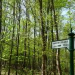 Marche en forêt avec vestiges du passé allemand