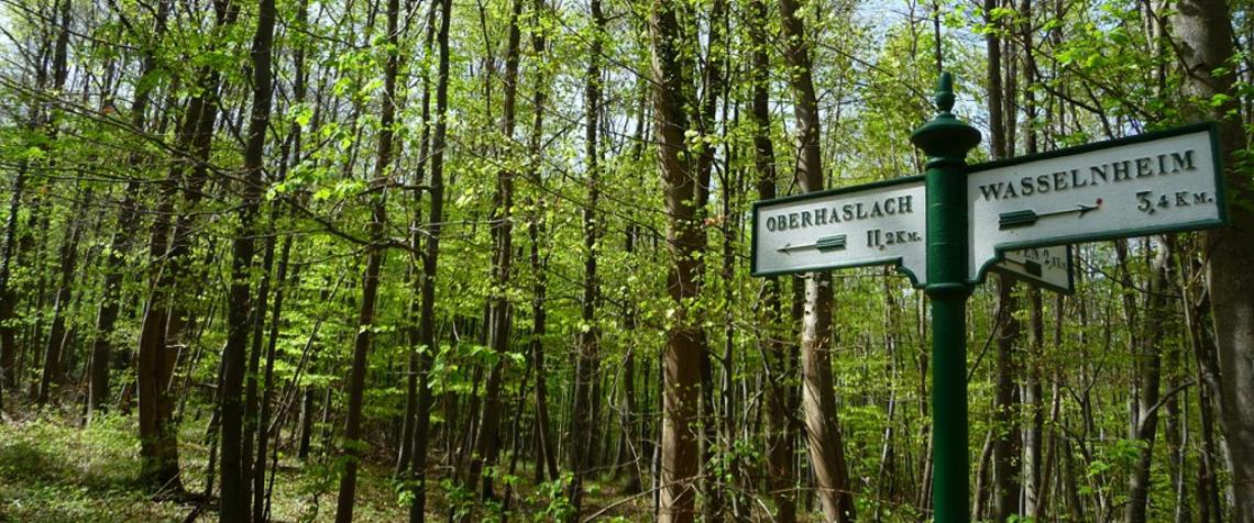 Forêt près de l'Elmerforst