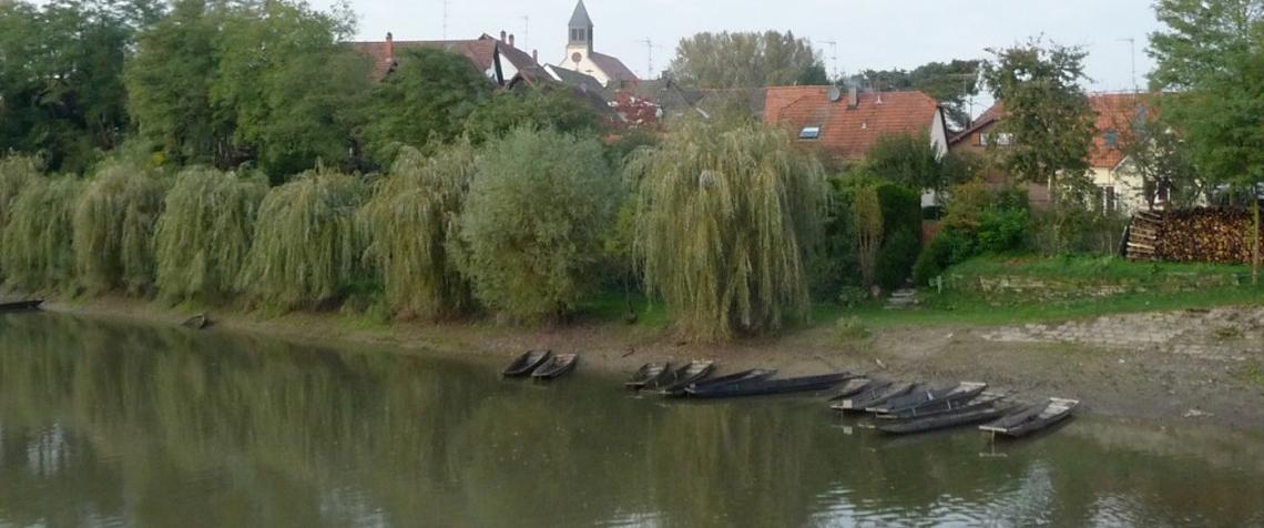 Paysage Rhénan près de Seltz